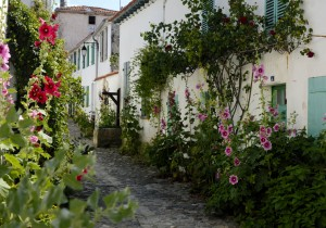 Hollyhocks lining a street with a well, La Flotte, Ile de Re, Charente-Maritine, France